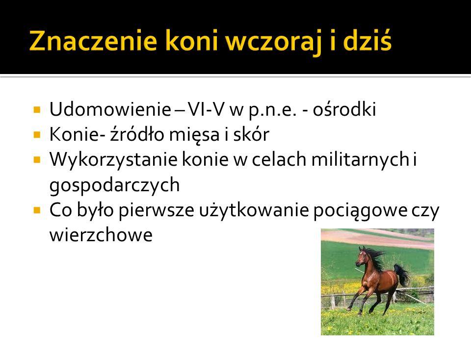 Znaczenie koni wczoraj i dziś