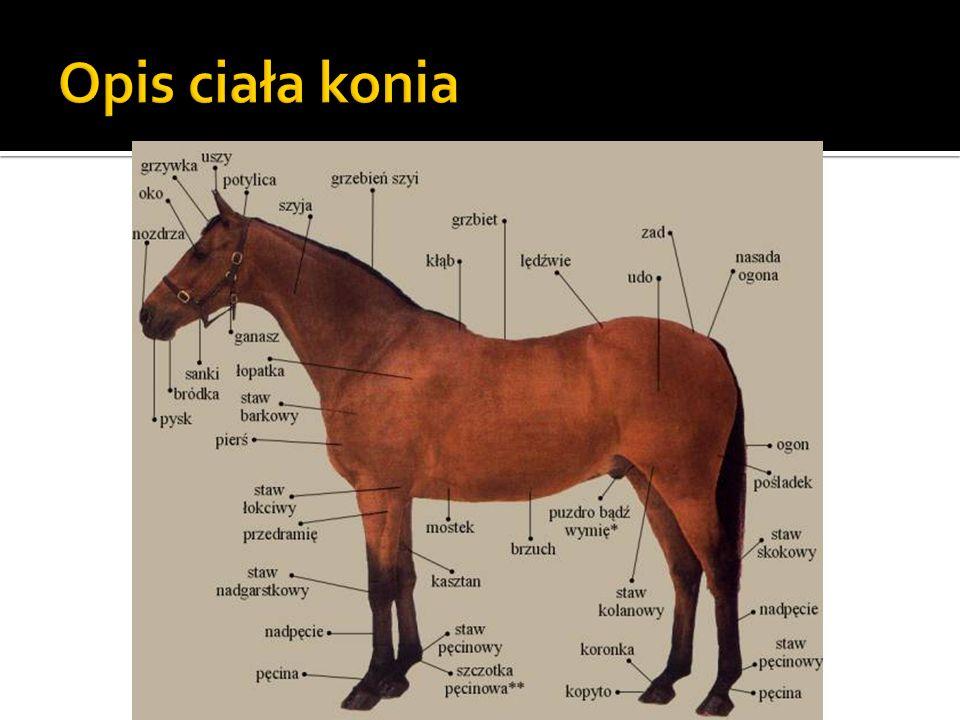 Opis ciała konia