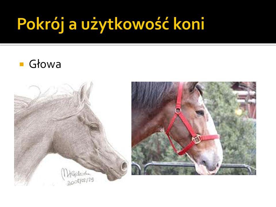 Pokrój a użytkowość koni