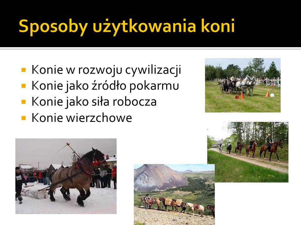 Sposoby użytkowania koni