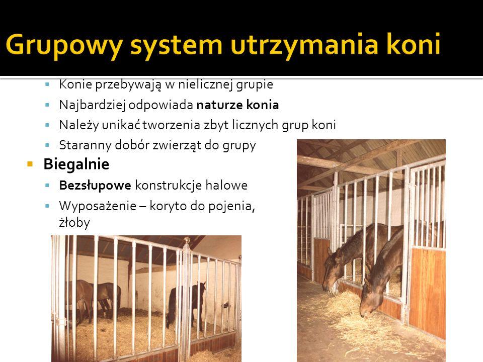 Grupowy system utrzymania koni