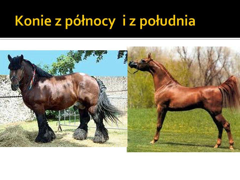 Konie z północy i z południa