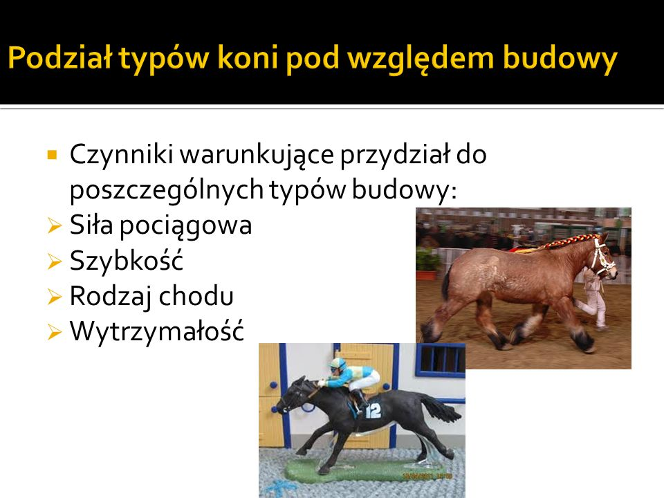 Podział typów koni pod względem budowy