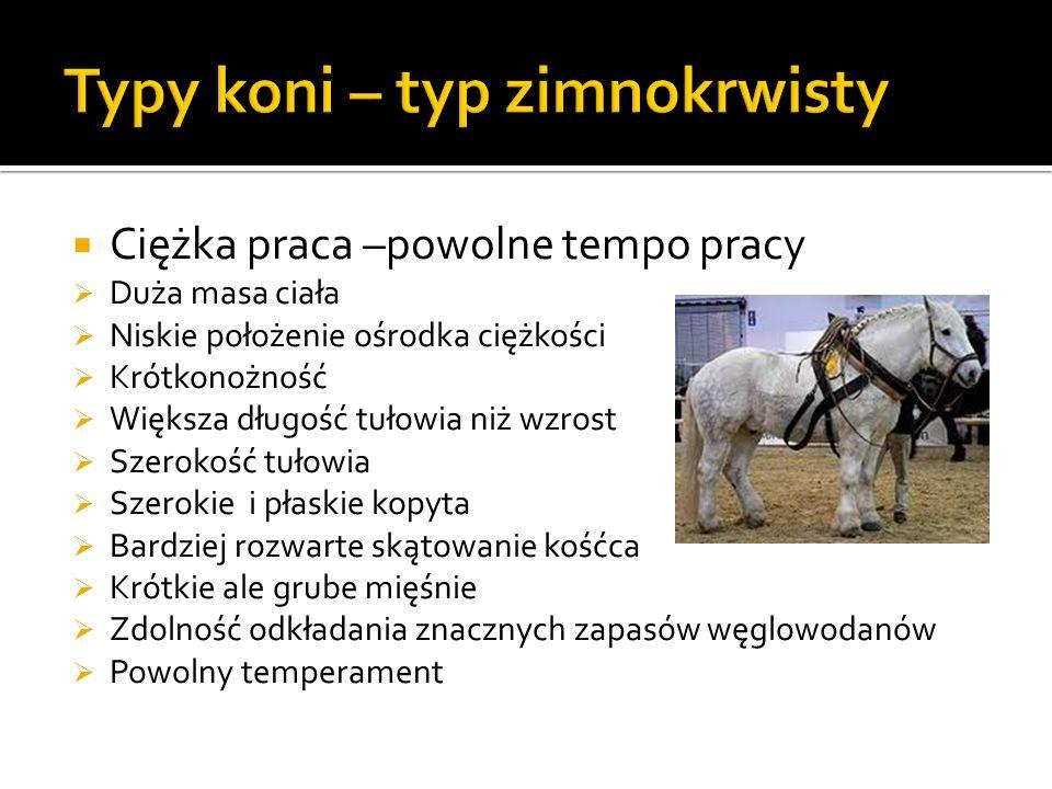 Typy koni – typ zimnokrwisty