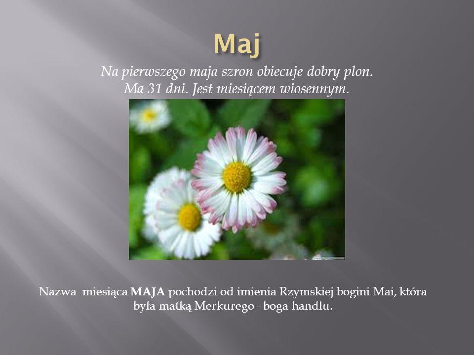Maj Na pierwszego maja szron obiecuje dobry plon. Ma 31 dni. Jest miesiącem wiosennym.