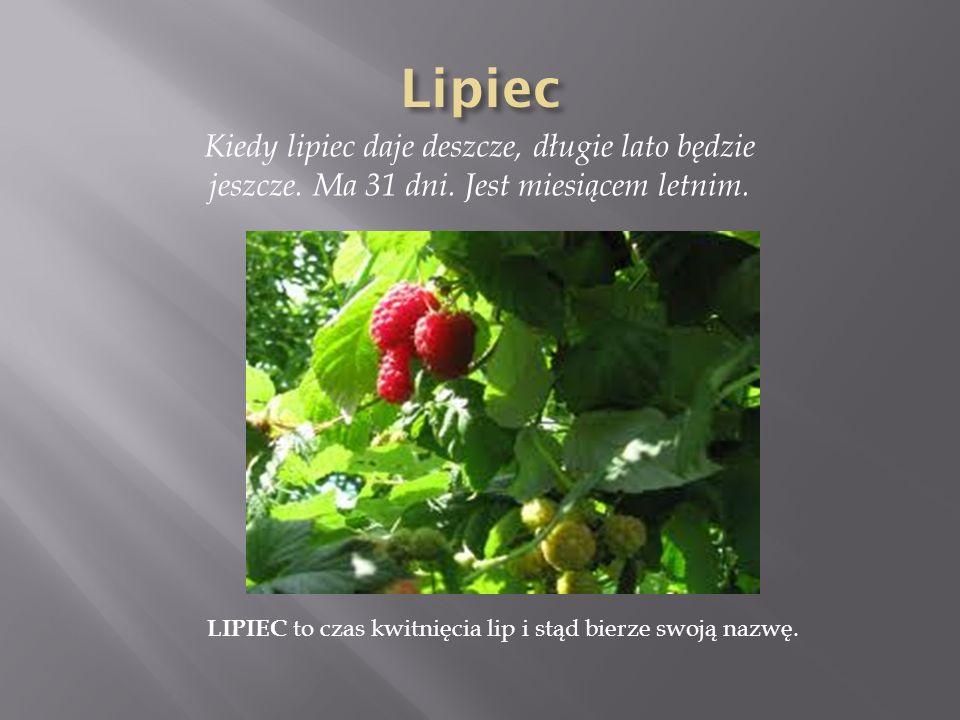 LIPIEC to czas kwitnięcia lip i stąd bierze swoją nazwę.