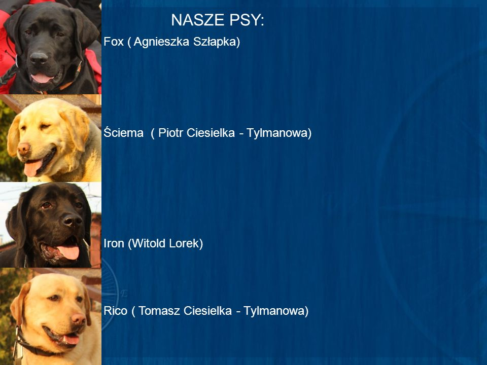 NASZE PSY: Fox ( Agnieszka Szłapka)