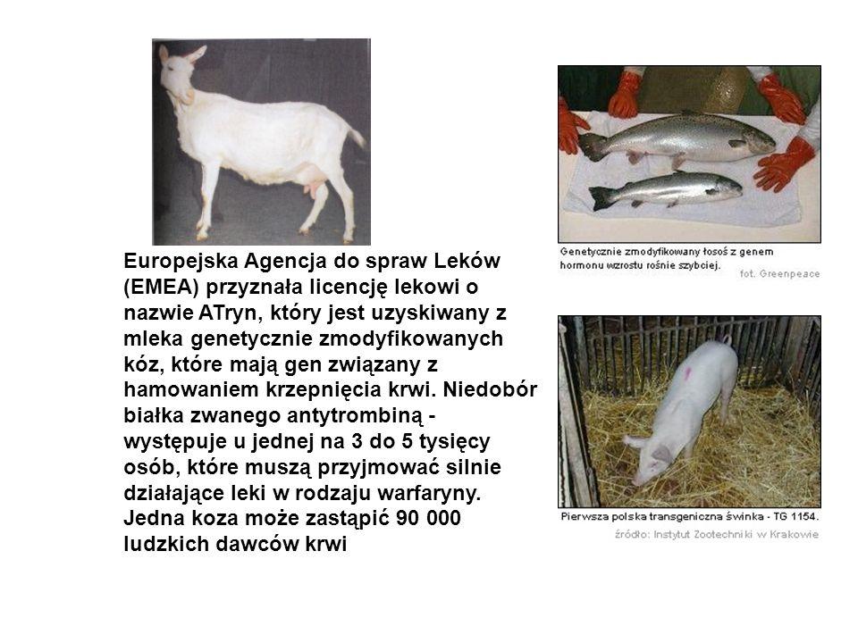 Europejska Agencja do spraw Leków (EMEA) przyznała licencję lekowi o nazwie ATryn, który jest uzyskiwany z mleka genetycznie zmodyfikowanych kóz, które mają gen związany z hamowaniem krzepnięcia krwi.
