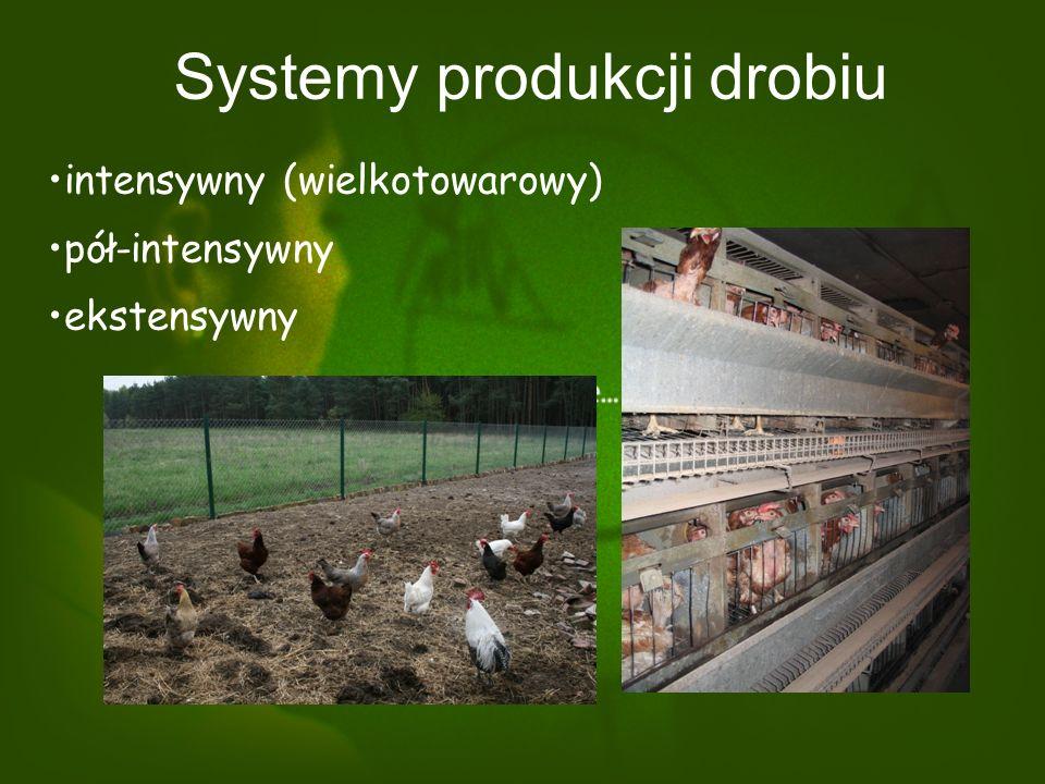 Systemy produkcji drobiu