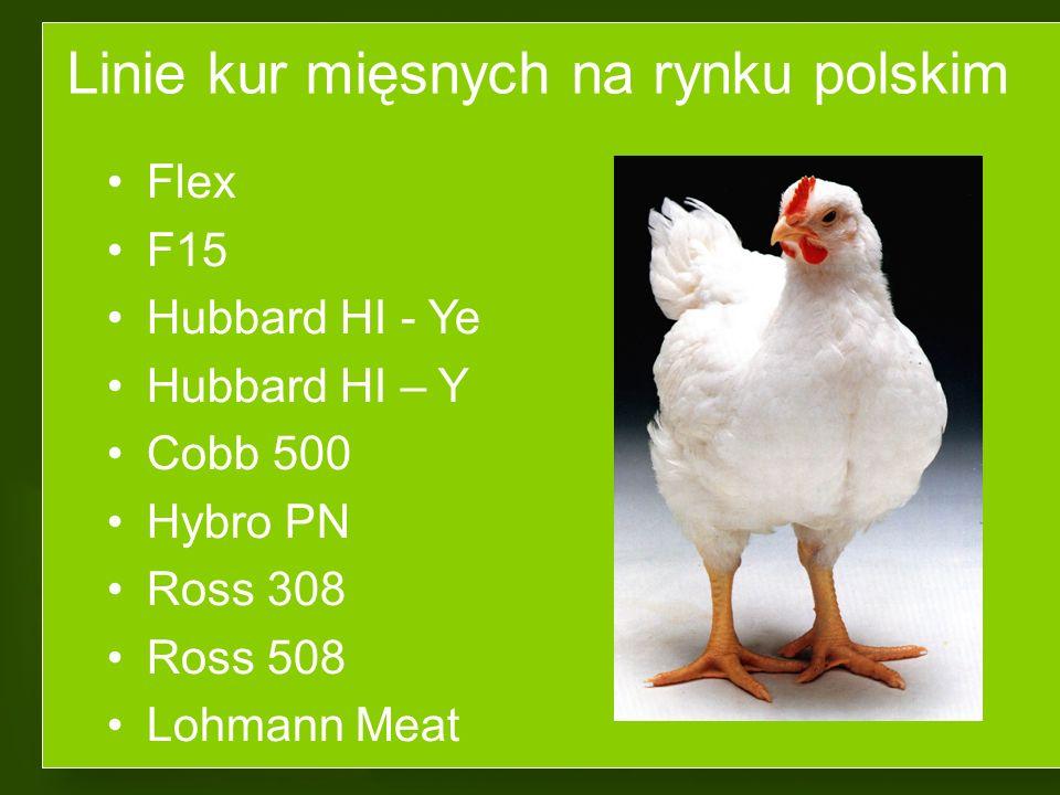 Linie kur mięsnych na rynku polskim