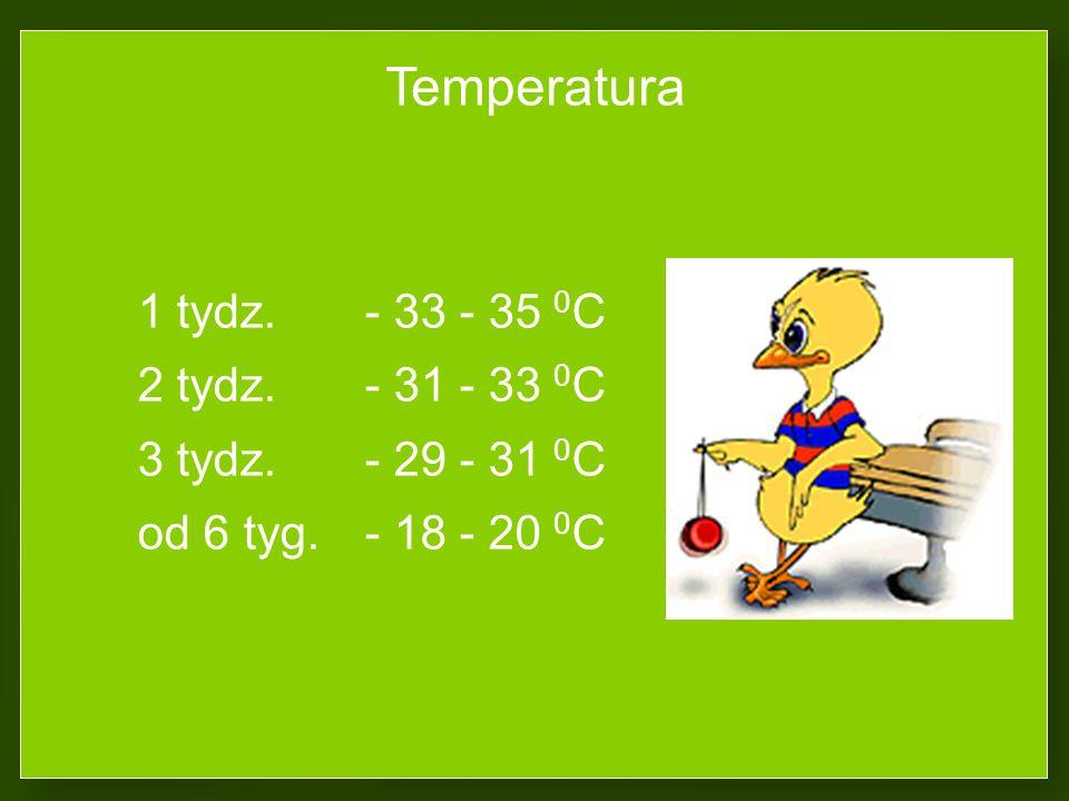 Temperatura 2 tydz. - 31 - 33 0C 3 tydz. - 29 - 31 0C