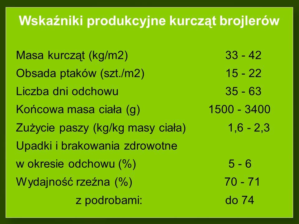 Wskaźniki produkcyjne kurcząt brojlerów