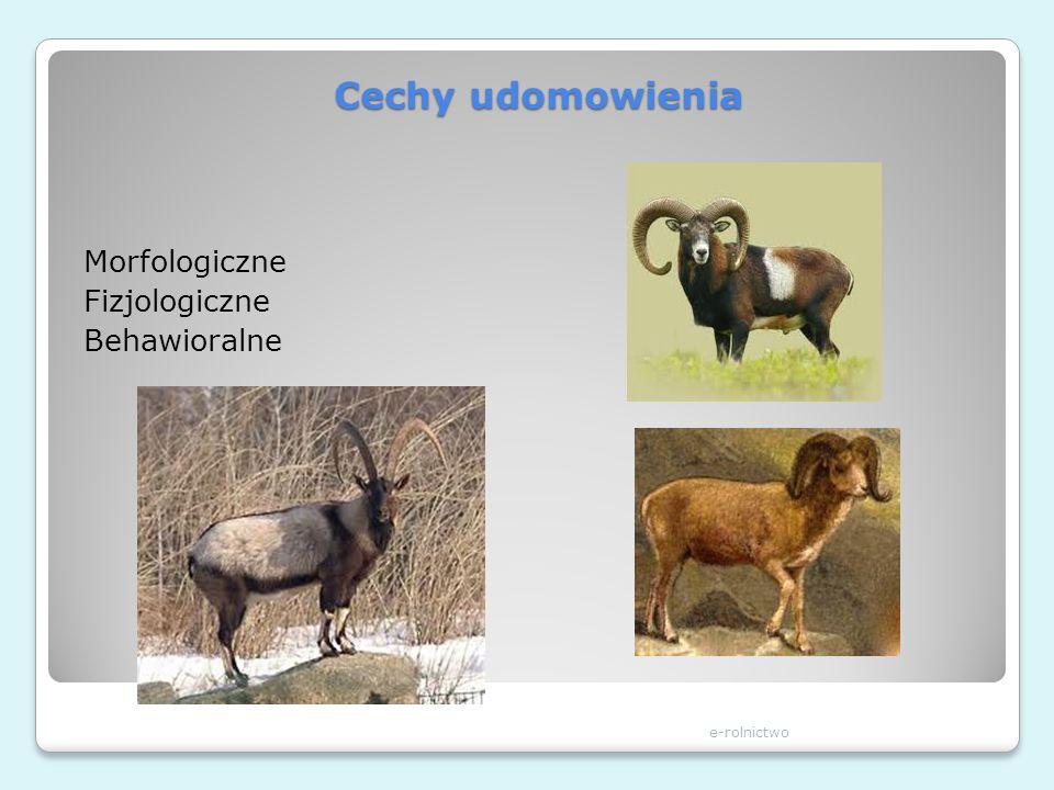 Cechy udomowienia Morfologiczne Fizjologiczne Behawioralne e-rolnictwo