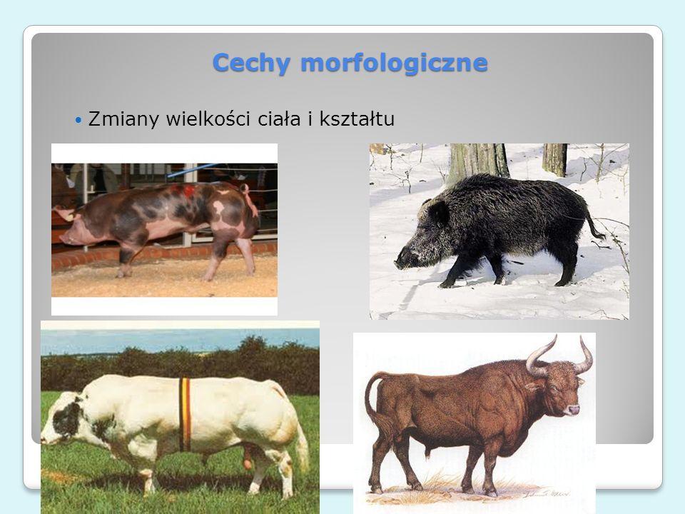 Cechy morfologiczne Zmiany wielkości ciała i kształtu e-rolnictwo