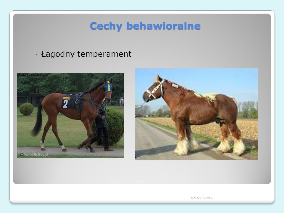 Cechy behawioralne Łagodny temperament e-rolnictwo