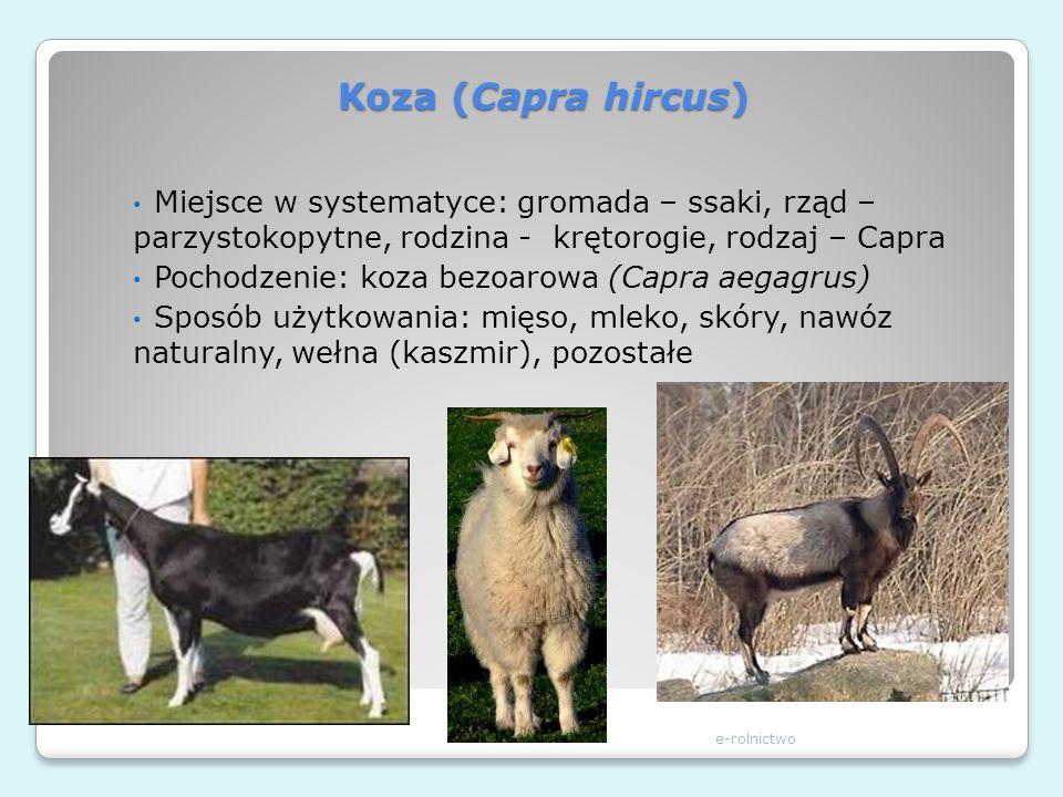 Koza (Capra hircus) Miejsce w systematyce: gromada – ssaki, rząd – parzystokopytne, rodzina - krętorogie, rodzaj – Capra.
