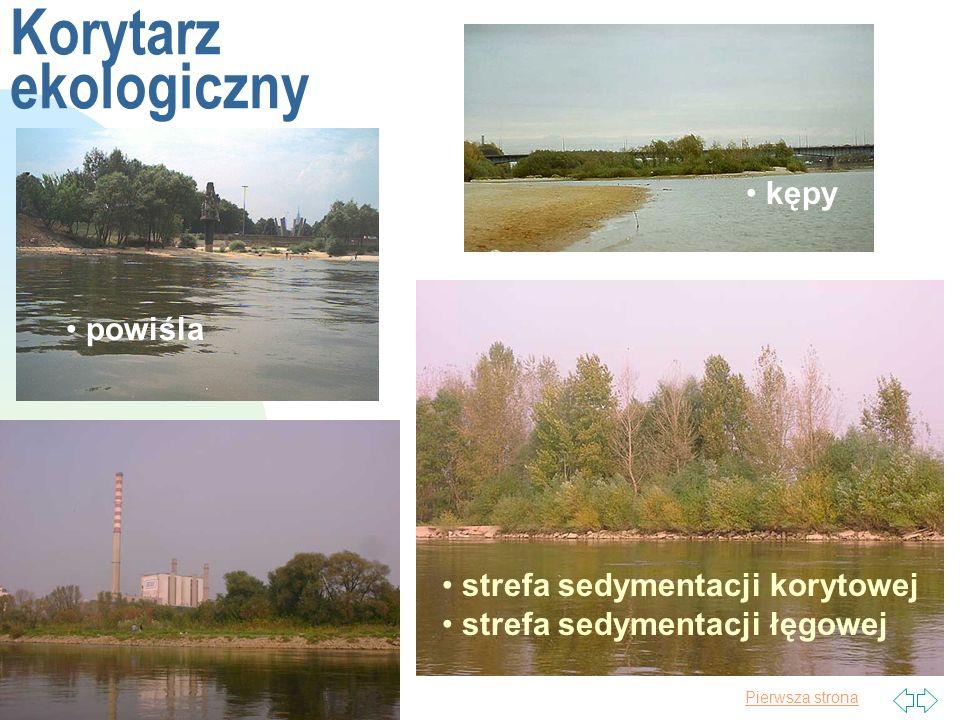 Korytarz ekologiczny kępy powiśla strefa sedymentacji korytowej