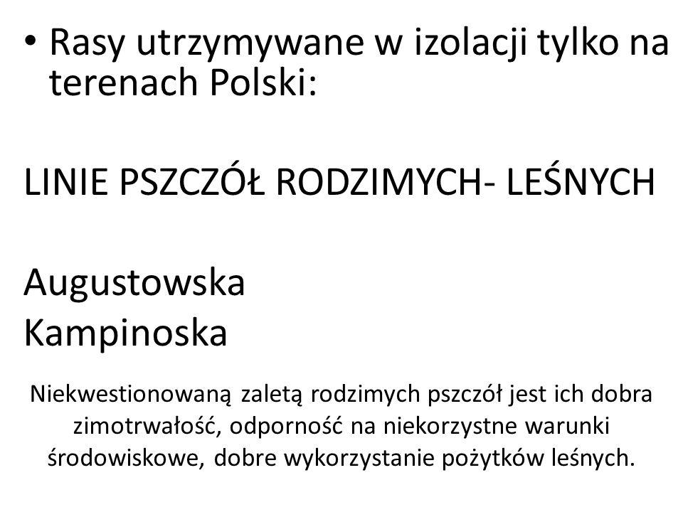 Rasy utrzymywane w izolacji tylko na terenach Polski: