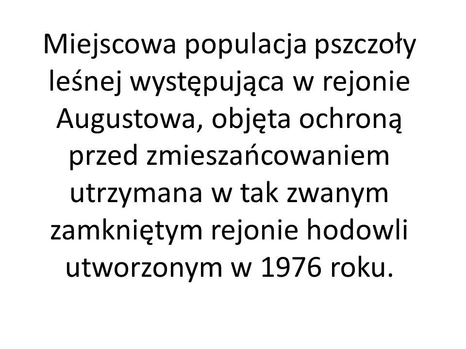 Miejscowa populacja pszczoły leśnej występująca w rejonie Augustowa, objęta ochroną przed zmieszańcowaniem utrzymana w tak zwanym zamkniętym rejonie hodowli utworzonym w 1976 roku.
