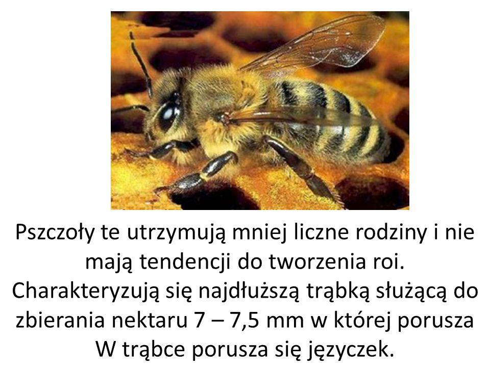 Pszczoły te utrzymują mniej liczne rodziny i nie mają tendencji do tworzenia roi.