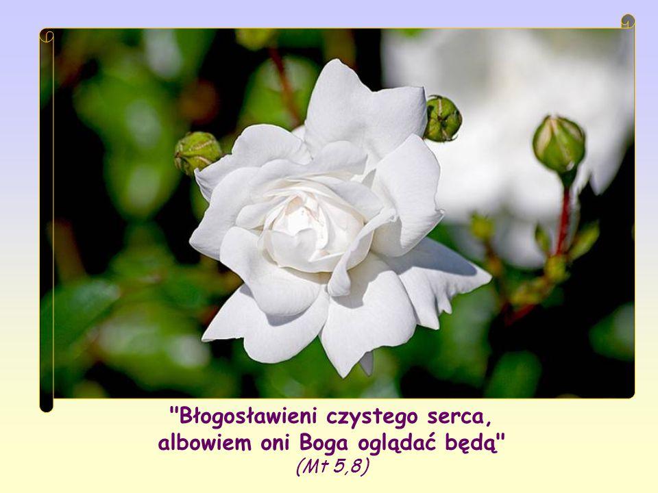 Błogosławieni czystego serca, albowiem oni Boga oglądać będą (Mt 5,8)