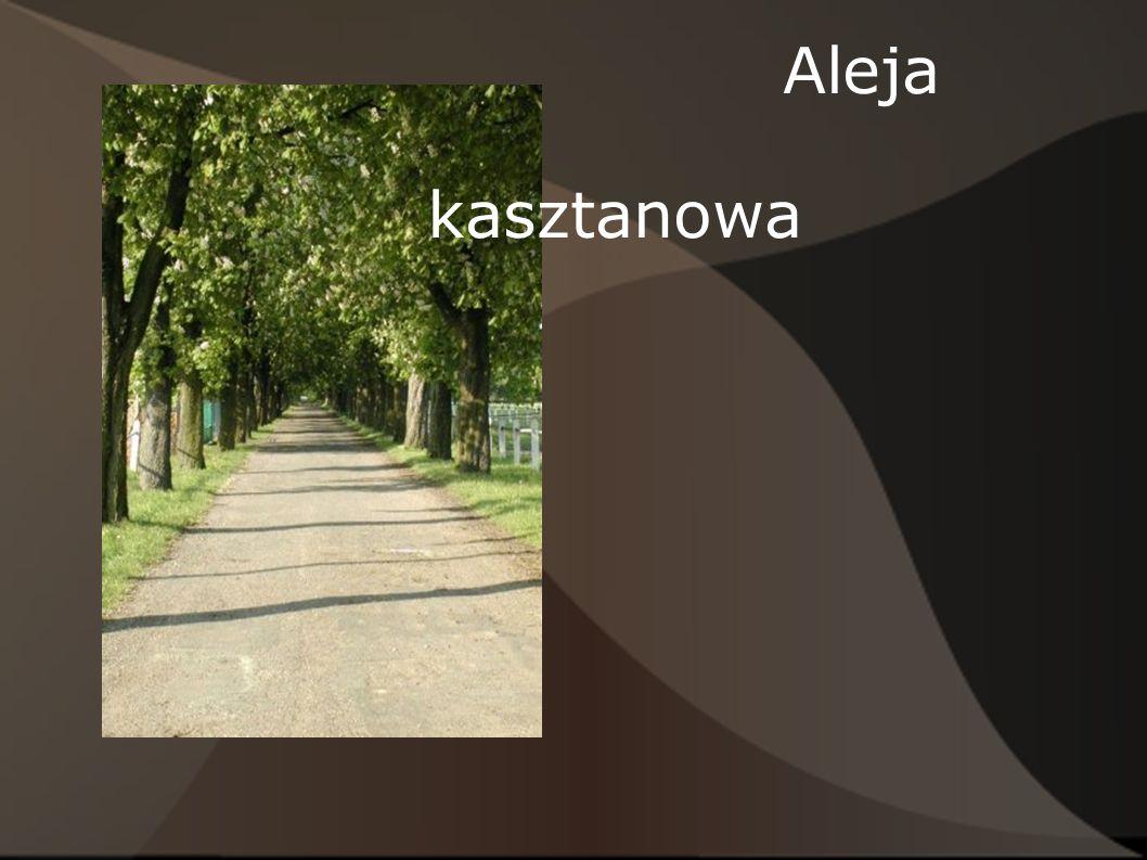 Aleja kasztanowa