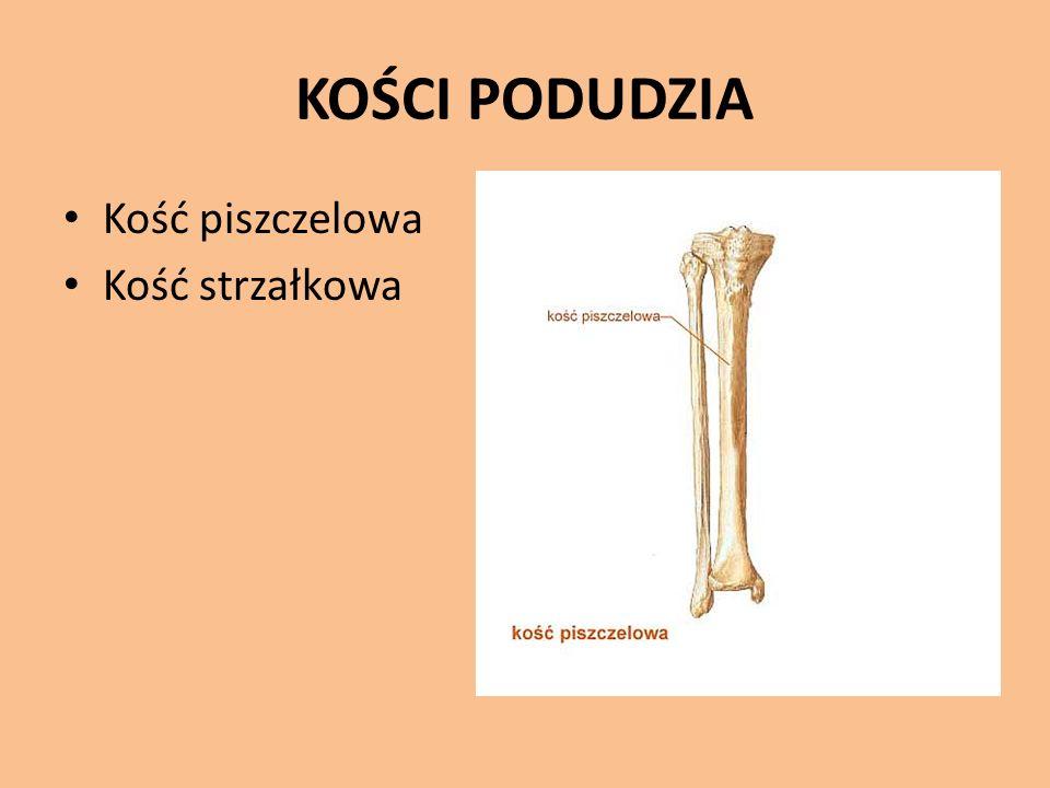 KOŚCI PODUDZIA Kość piszczelowa Kość strzałkowa