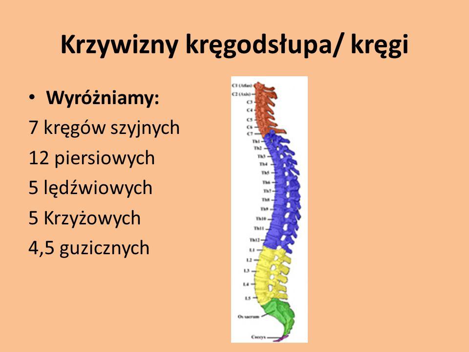 Krzywizny kręgodsłupa/ kręgi