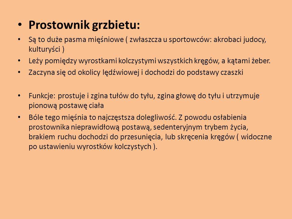 Prostownik grzbietu: Są to duże pasma mięśniowe ( zwłaszcza u sportowców: akrobaci judocy, kulturyści )