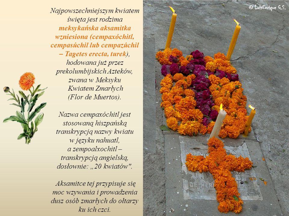 Nazwa cempaxóchitl jest stosowaną hiszpańską transkrypcją nazwy kwiatu