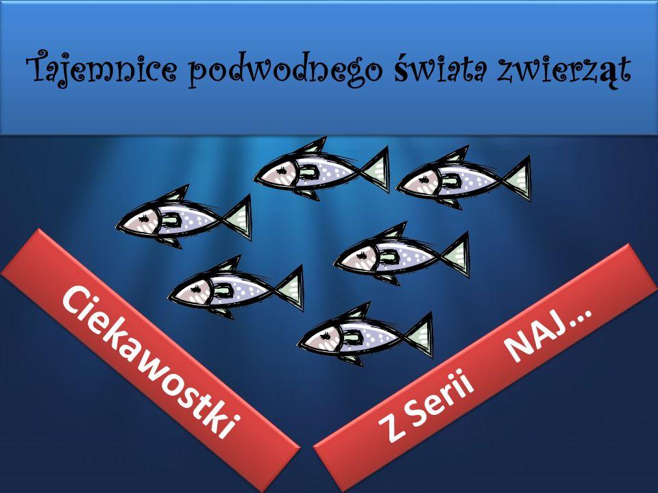 Tajemnice podwodnego świata zwierząt