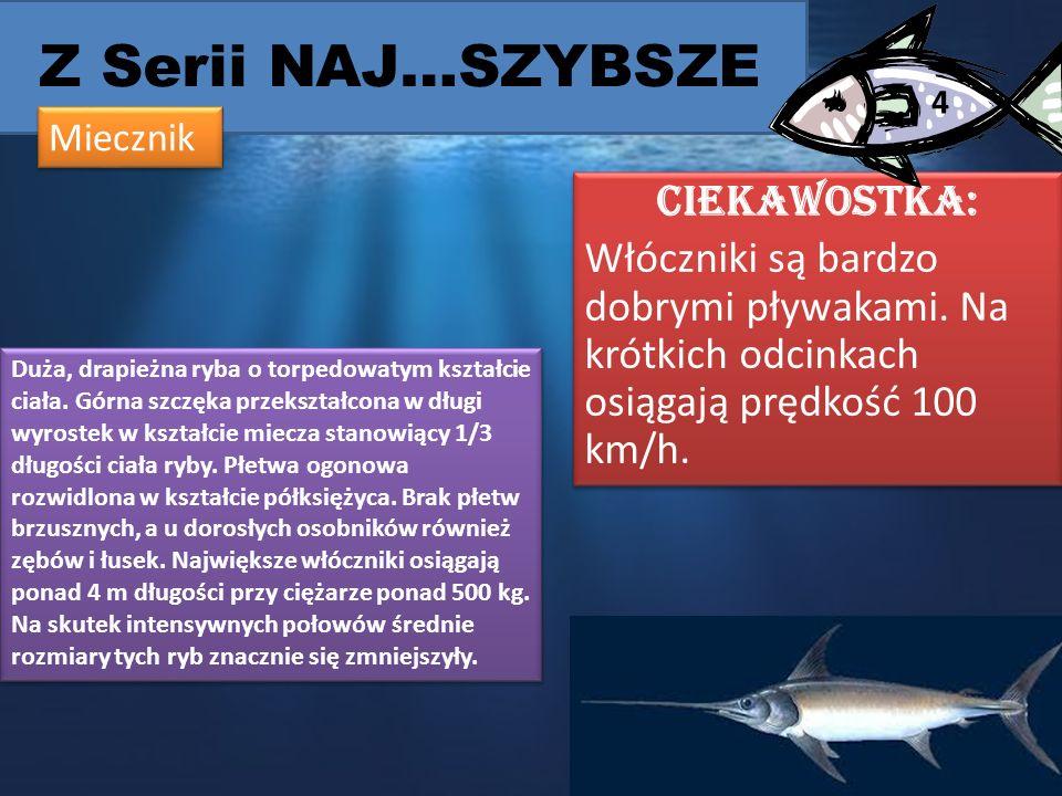 Z Serii NAJ…SZYBSZE 4. Miecznik. CIEKAWOSTKA: Włóczniki są bardzo dobrymi pływakami. Na krótkich odcinkach osiągają prędkość 100 km/h.