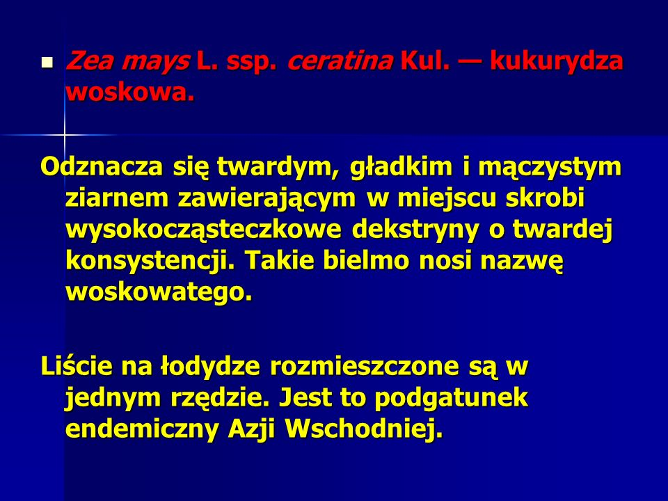 Zea mays L. ssp. ceratina Kul. — kukurydza woskowa.