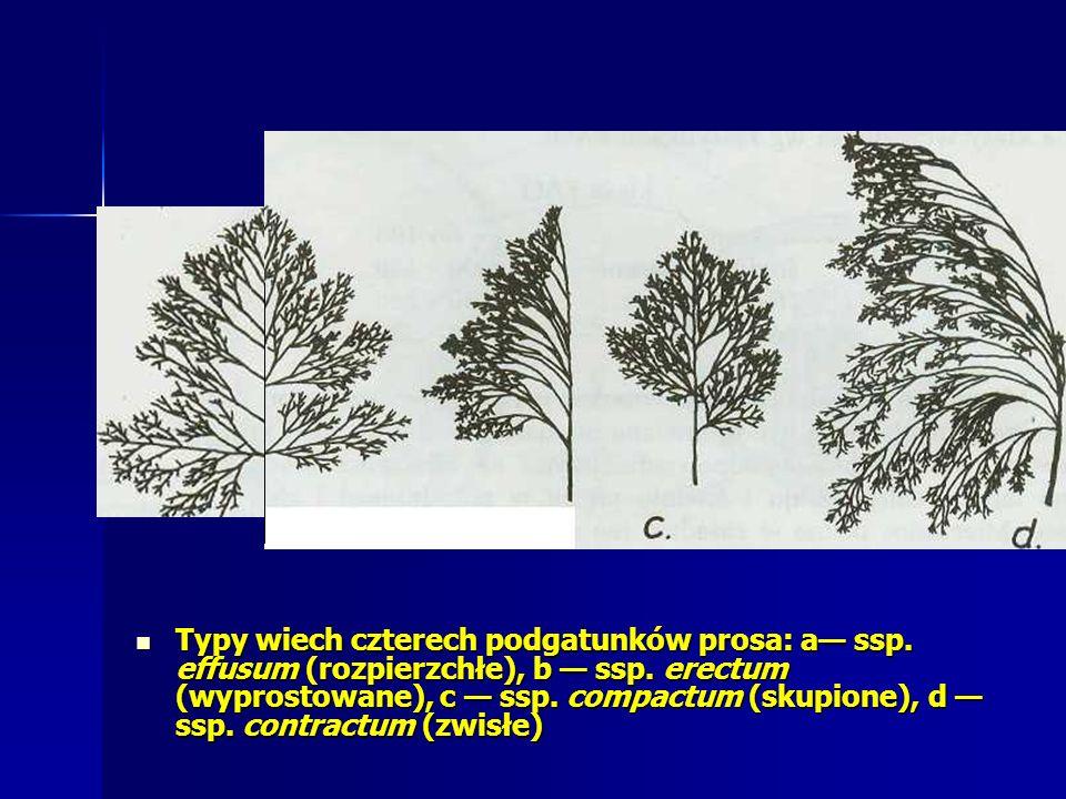 Typy wiech czterech podgatunków prosa: a— ssp