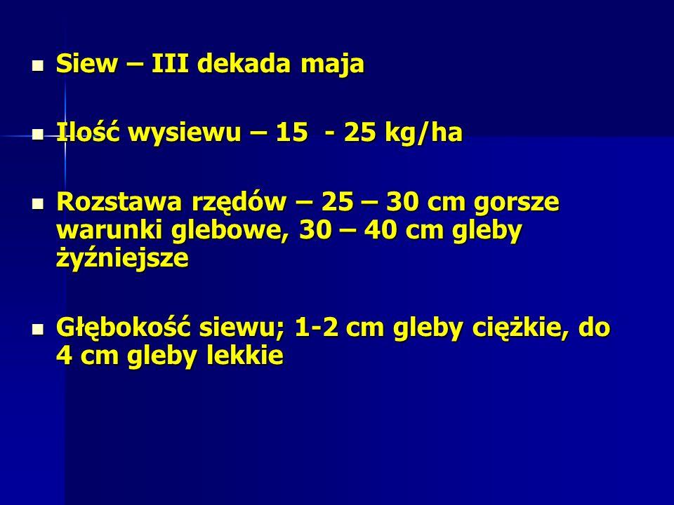 Siew – III dekada maja Ilość wysiewu – 15 - 25 kg/ha. Rozstawa rzędów – 25 – 30 cm gorsze warunki glebowe, 30 – 40 cm gleby żyźniejsze.