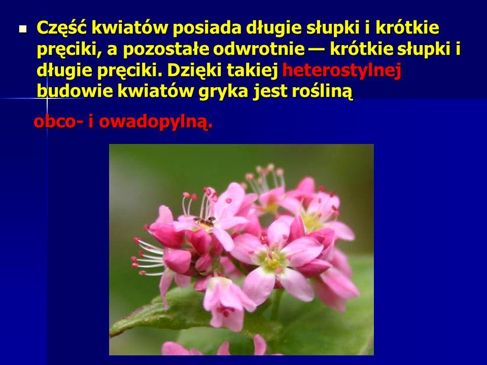 Część kwiatów posiada długie słupki i krótkie pręciki, a pozostałe odwrotnie — krótkie słupki i długie pręciki. Dzięki takiej heterostylnej budowie kwiatów gryka jest rośliną