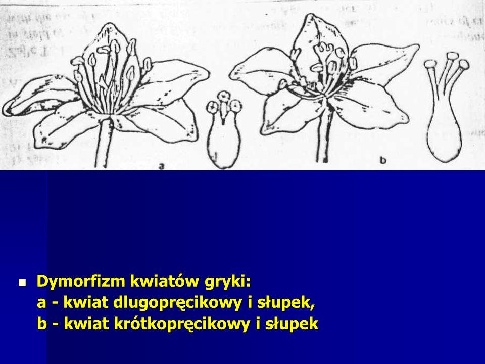 Dymorfizm kwiatów gryki: