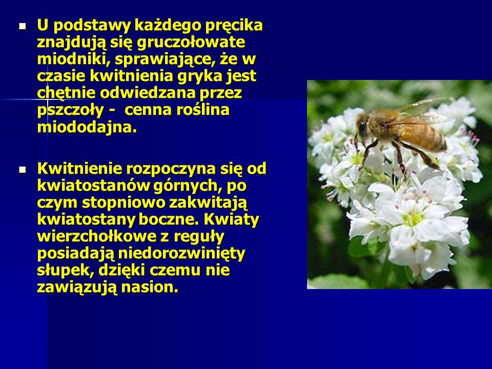 U podstawy każdego pręcika znajdują się gruczołowate miodniki, sprawiające, że w czasie kwitnienia gryka jest chętnie odwiedzana przez pszczoły - cenna roślina miododajna.