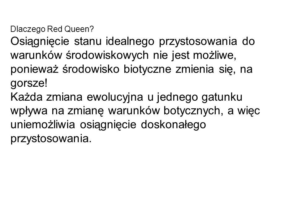 Dlaczego Red Queen