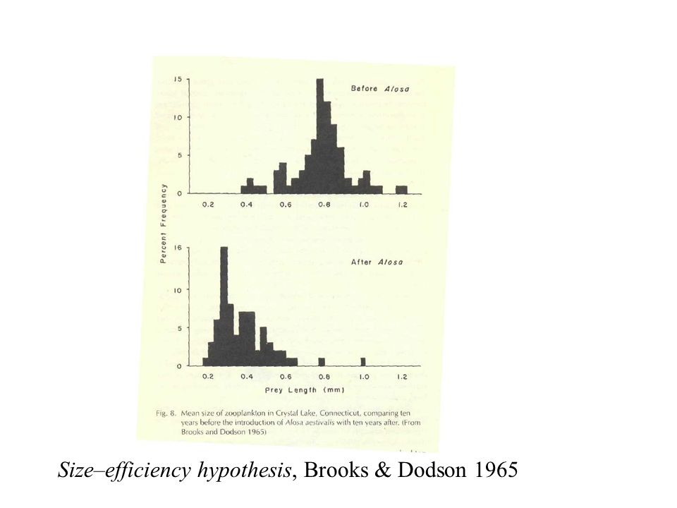 Size–efficiency hypothesis, Brooks & Dodson 1965