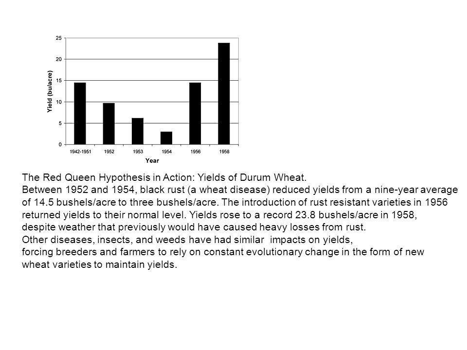 The Red Queen Hypothesis in Action: Yields of Durum Wheat
