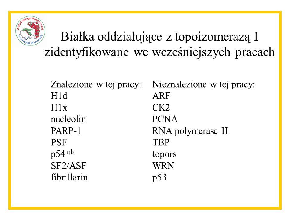 Białka oddziałujące z topoizomerazą I