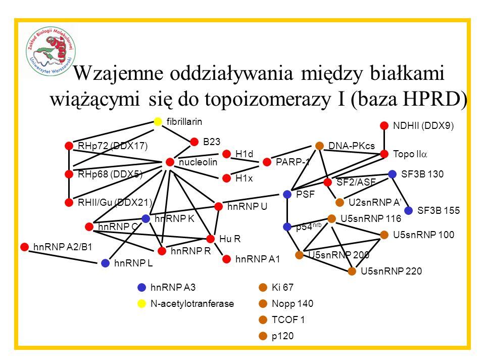 Wzajemne oddziaływania między białkami