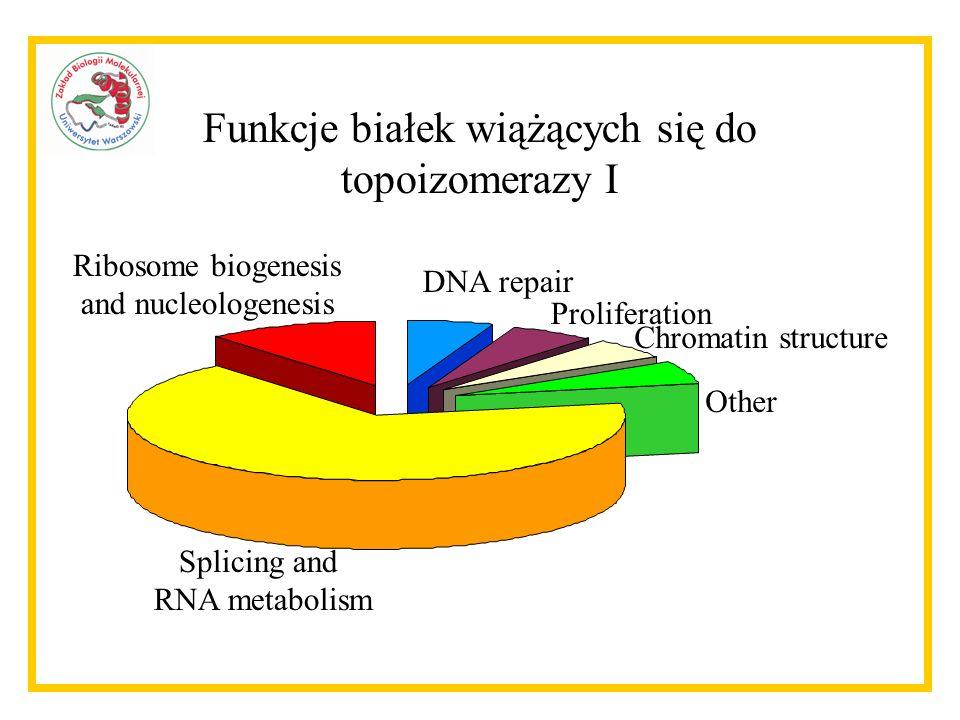 Funkcje białek wiążących się do