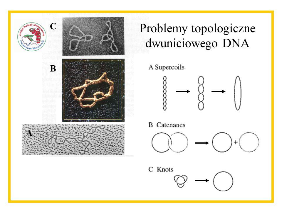 Problemy topologiczne