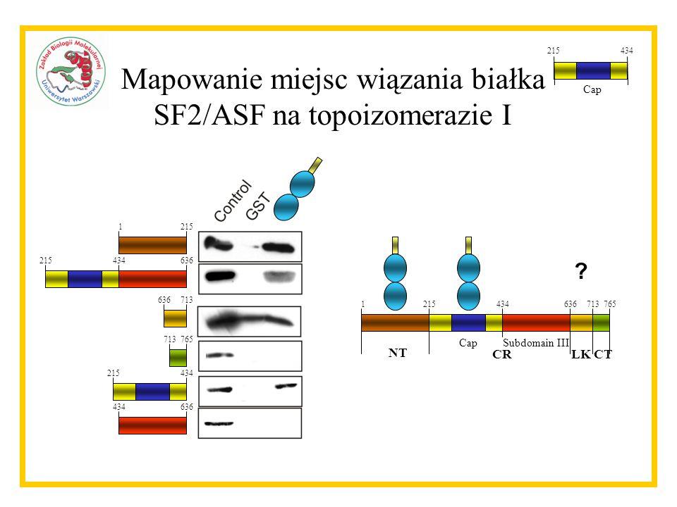 Mapowanie miejsc wiązania białka SF2/ASF na topoizomerazie I