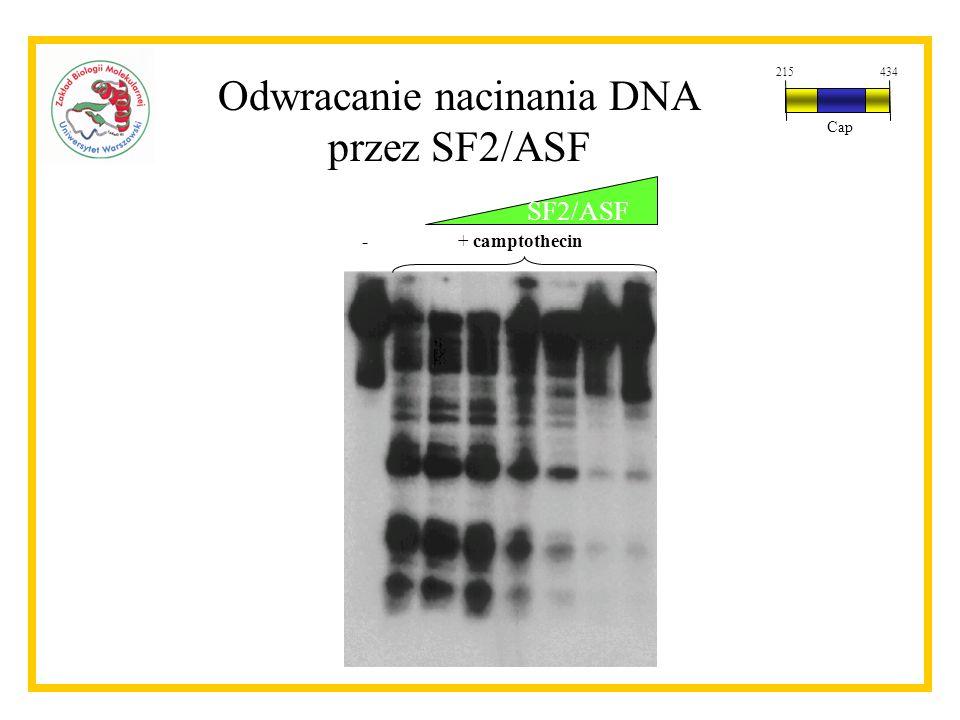 Odwracanie nacinania DNA