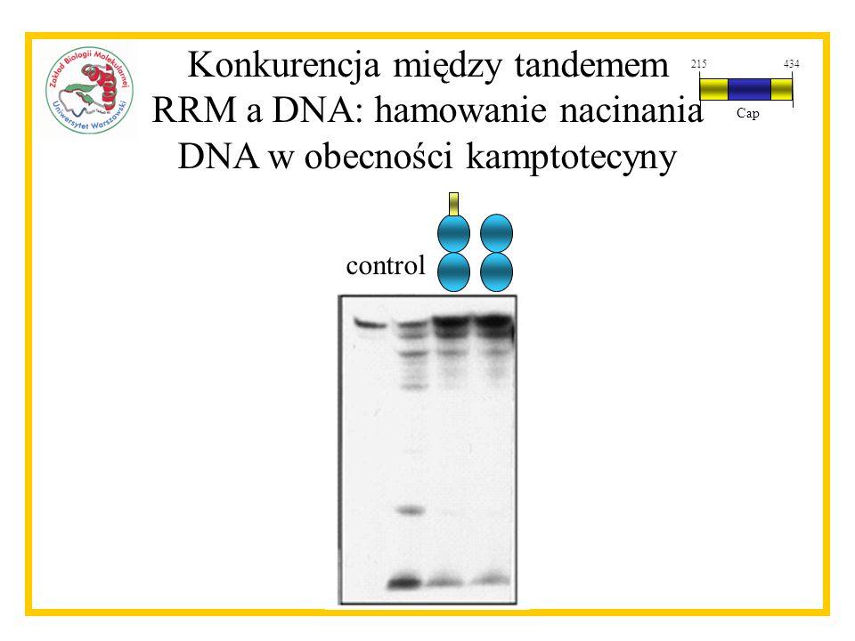 Konkurencja między tandemem RRM a DNA: hamowanie nacinania