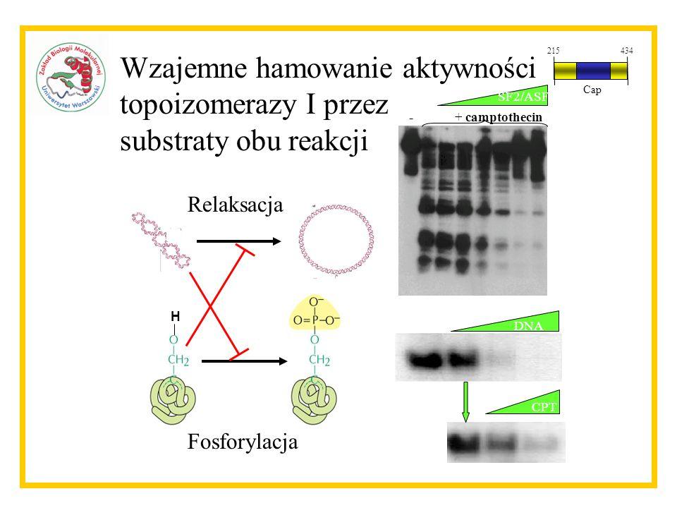 Wzajemne hamowanie aktywności topoizomerazy I przez