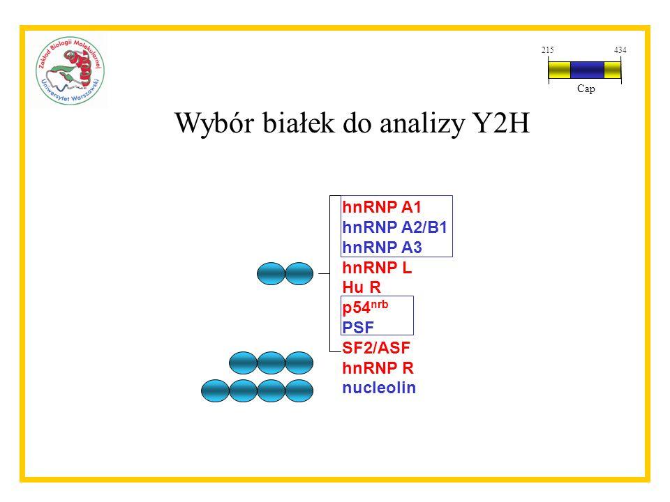 Wybór białek do analizy Y2H
